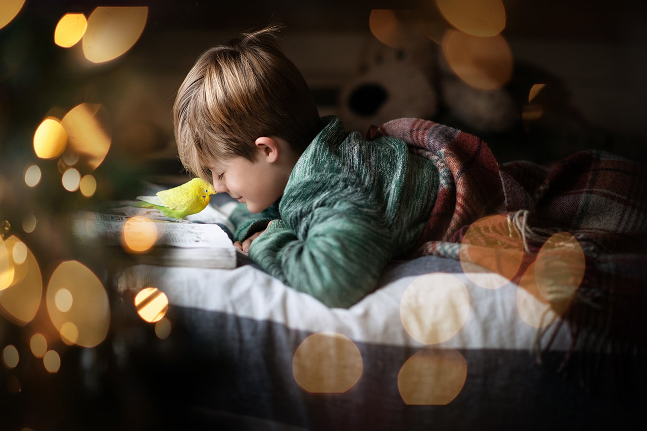 little boy laying in bed with green parakeet and Christmas tree bokeh (boulder photographer)